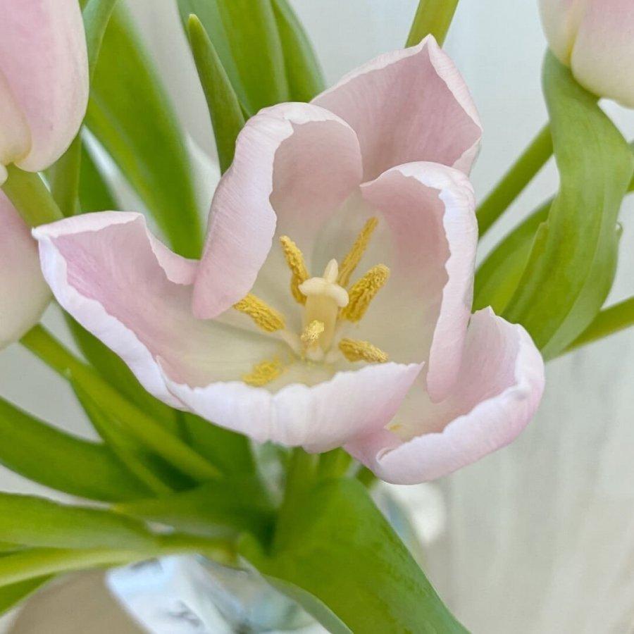 Tulip Fleur Jar - 1
