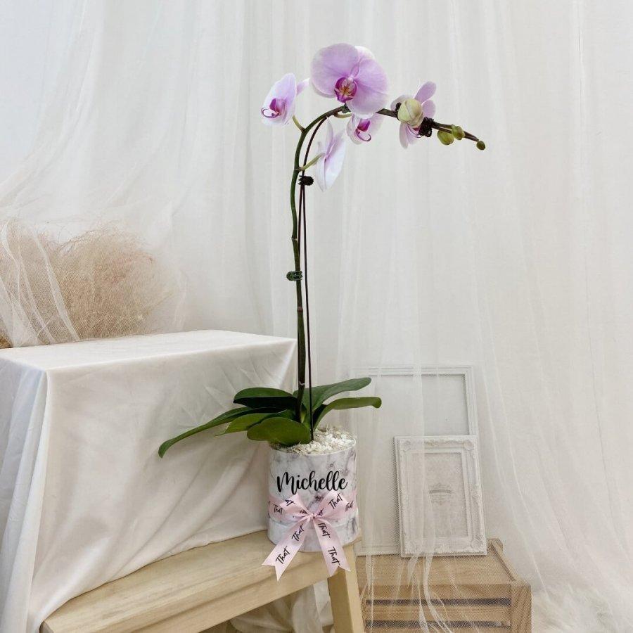 Single Phalaenopsis (Lilac)